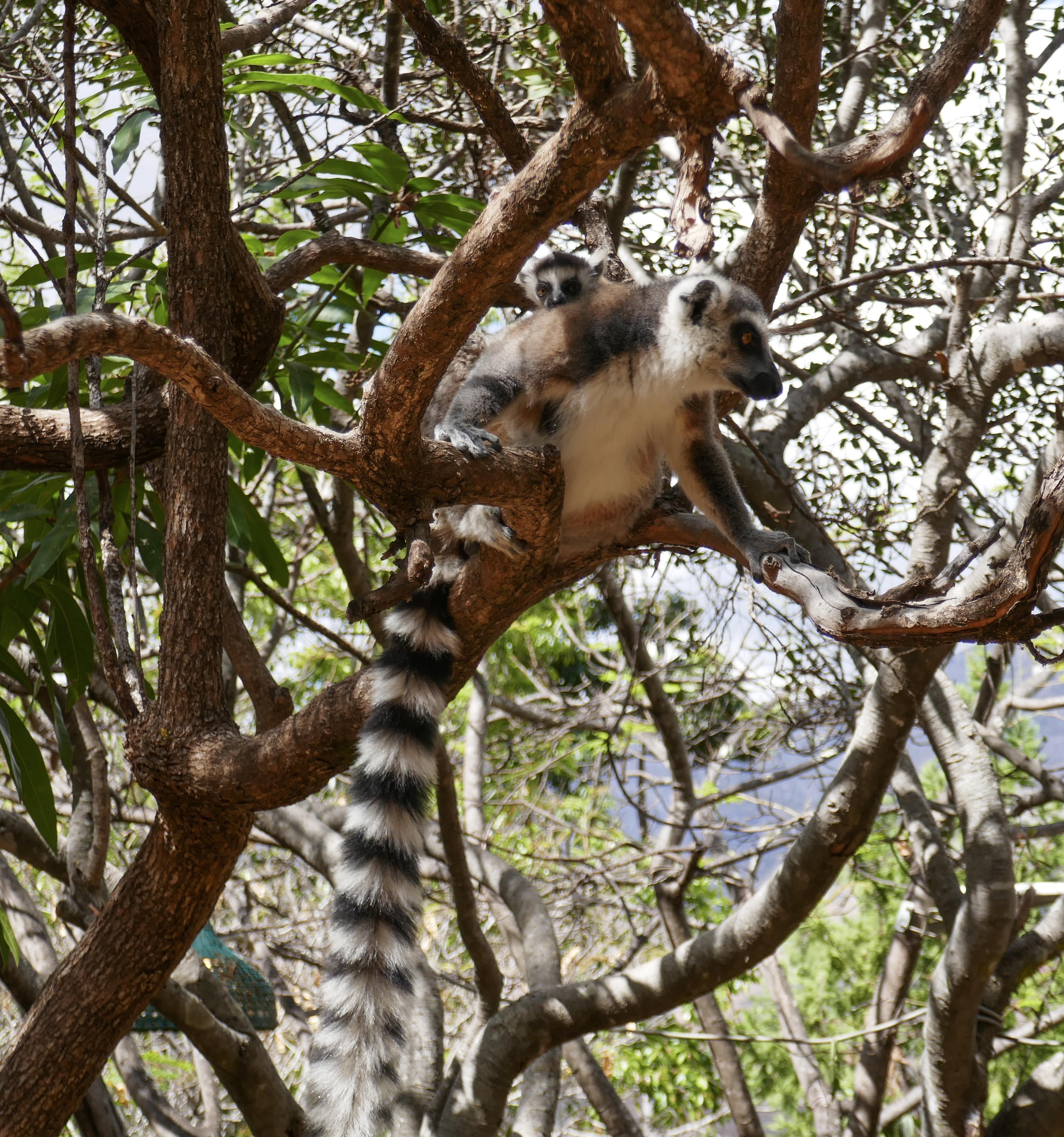 Voyage d'escalade à Madagascar