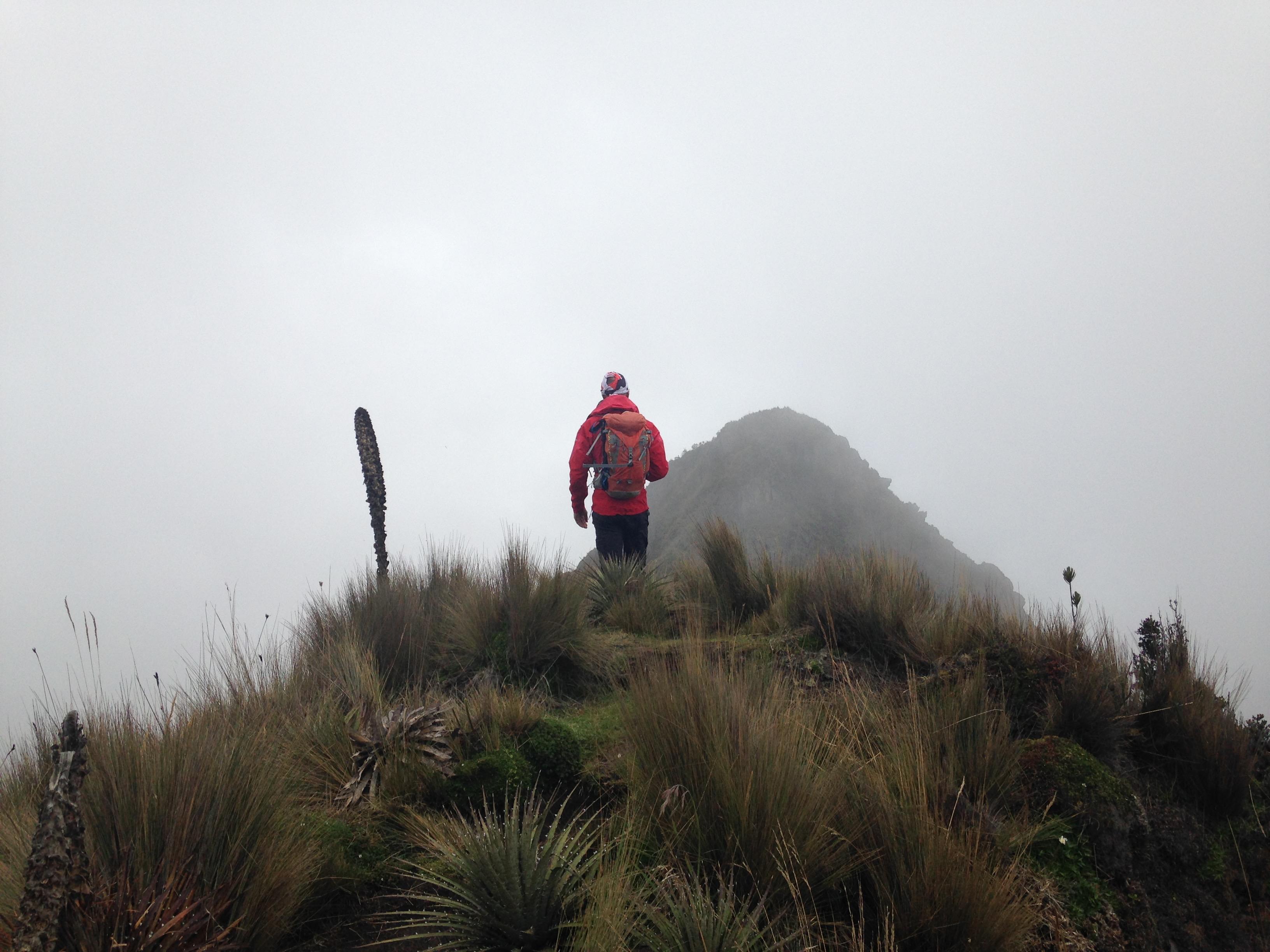 Végétation luxuriante au-delà de 4000 mètres